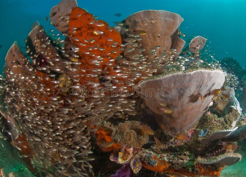 Cena geral do recife, Raja Ampat, Indonésia foto de stock royalty free