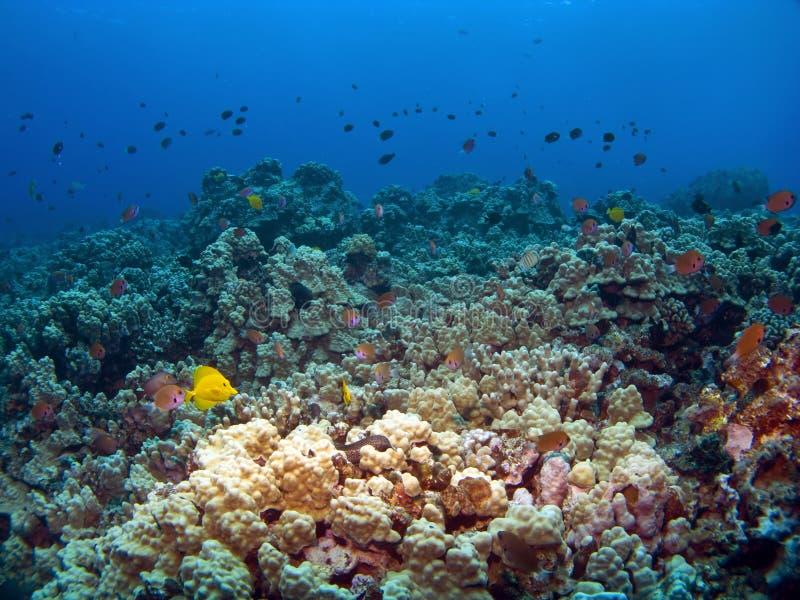Cena havaiana do recife em Kona fotografia de stock royalty free