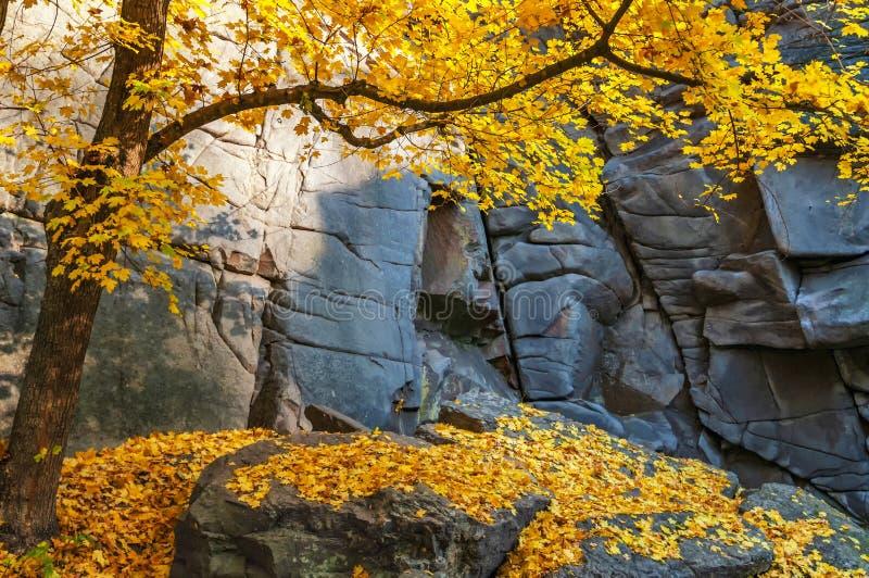 Cena mágica do outono com as folhas caídas do vermelho e do amarelo fotografia de stock