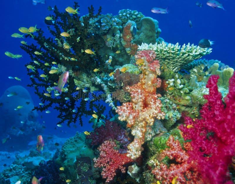 Cena macia do recife coral foto de stock