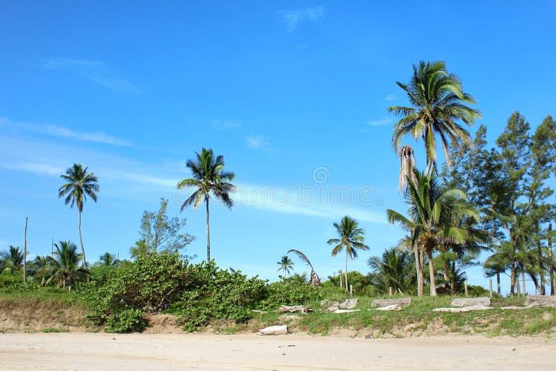 Cena mexicana da praia imagem de stock royalty free