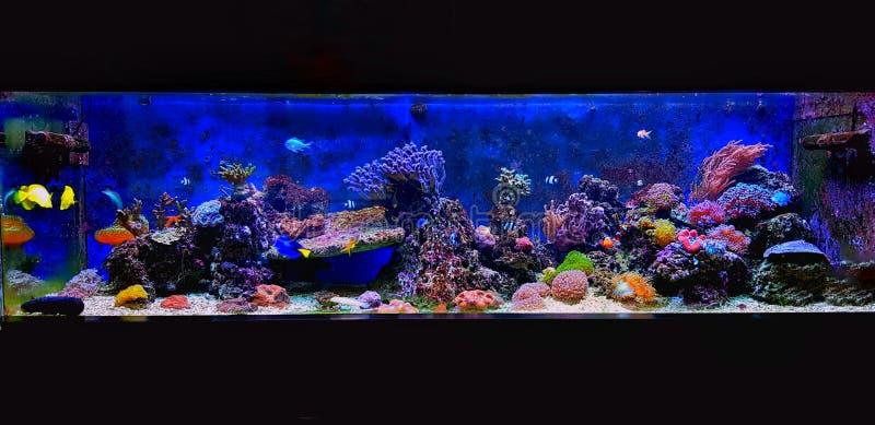 Cena no aqu?rio do recife de corais da ?gua salgada imagens de stock royalty free