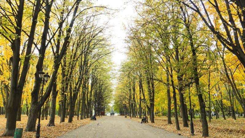 A cena outonal com amarelo e verde sae nas árvores e fal fotografia de stock royalty free