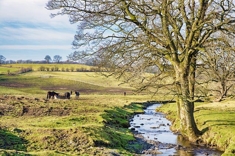 Cena rural inglesa com um córrego e uma árvore desencapada imagem de stock royalty free