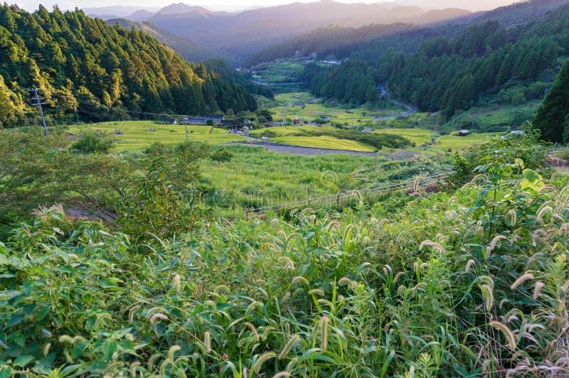 Cena rural japonesa de terraços do arroz e da grama selvagem no por do sol imagens de stock