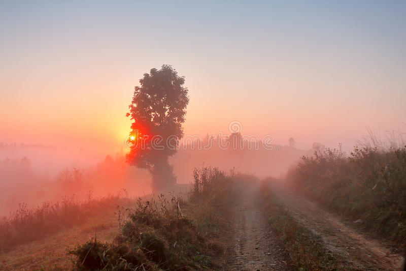 Cena rural nevoenta Estrada de terra na manhã enevoada imagens de stock royalty free