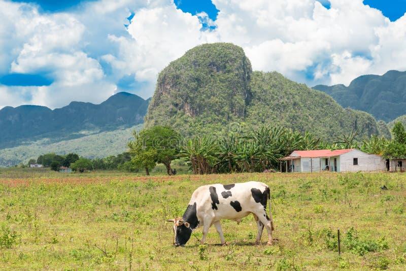 Cena rural no vale de Vinales em Cuba imagem de stock