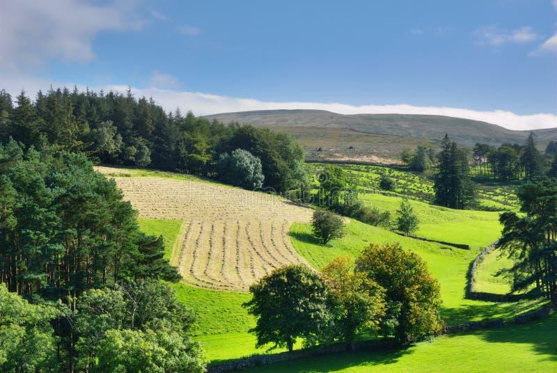 Cena rural nos Dales de Yorkshire imagem de stock royalty free