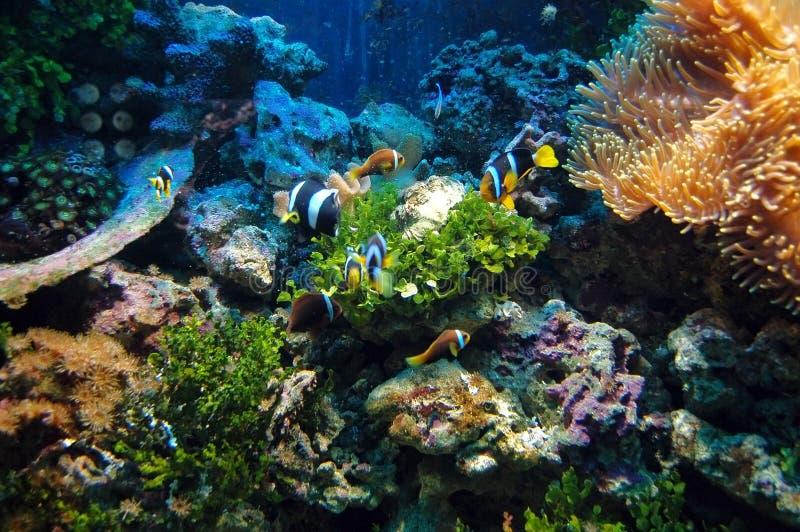 Cena subaquática foto de stock royalty free