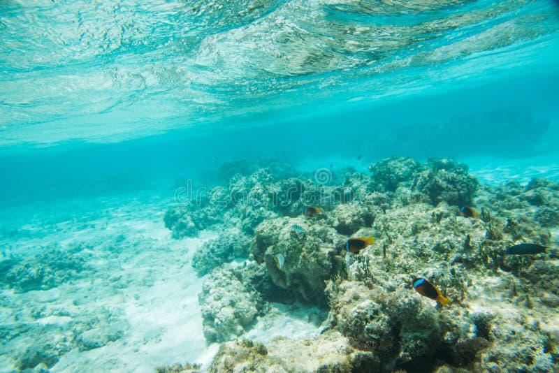 Cena submarina: Nova Caledônia fotos de stock