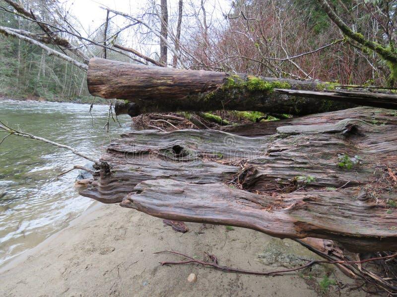 Cena superior do rio de Snoqualmie, parque estadual de Olallie fotografia de stock