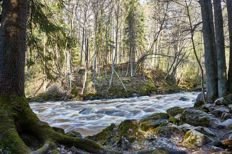 Cena temperamental calma do rio na floresta imagem de stock