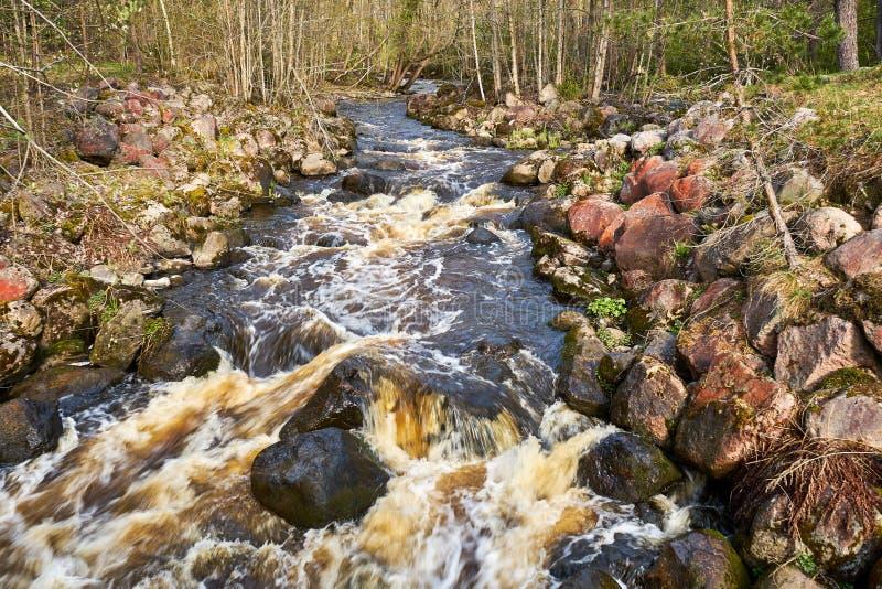 Cena temperamental calma do rio na floresta imagens de stock royalty free