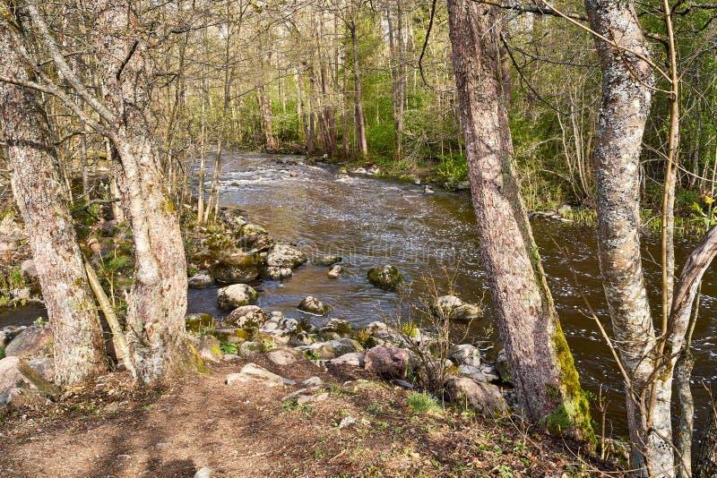 Cena temperamental calma do rio na floresta no tempo de mola fotos de stock