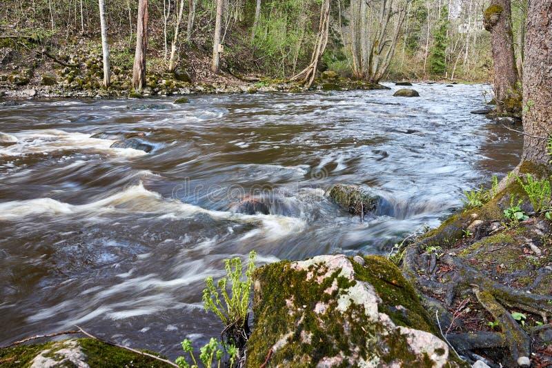 Cena temperamental calma do rio na floresta no tempo de mola foto de stock