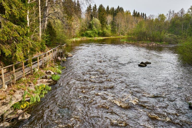 Cena temperamental calma do rio na floresta no tempo de mola fotografia de stock