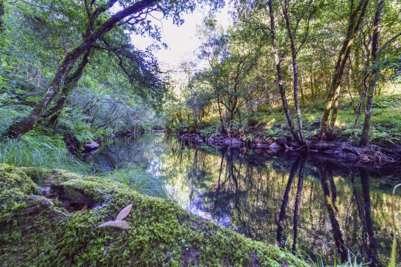 Cena tranquilo de um rio pequeno da montanha chamado fotos de stock