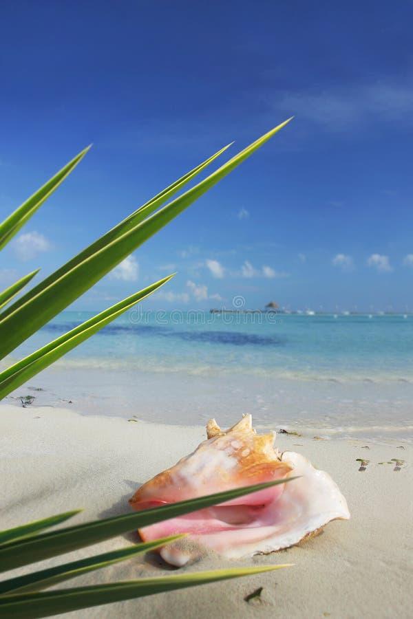 Cena tropical imagens de stock