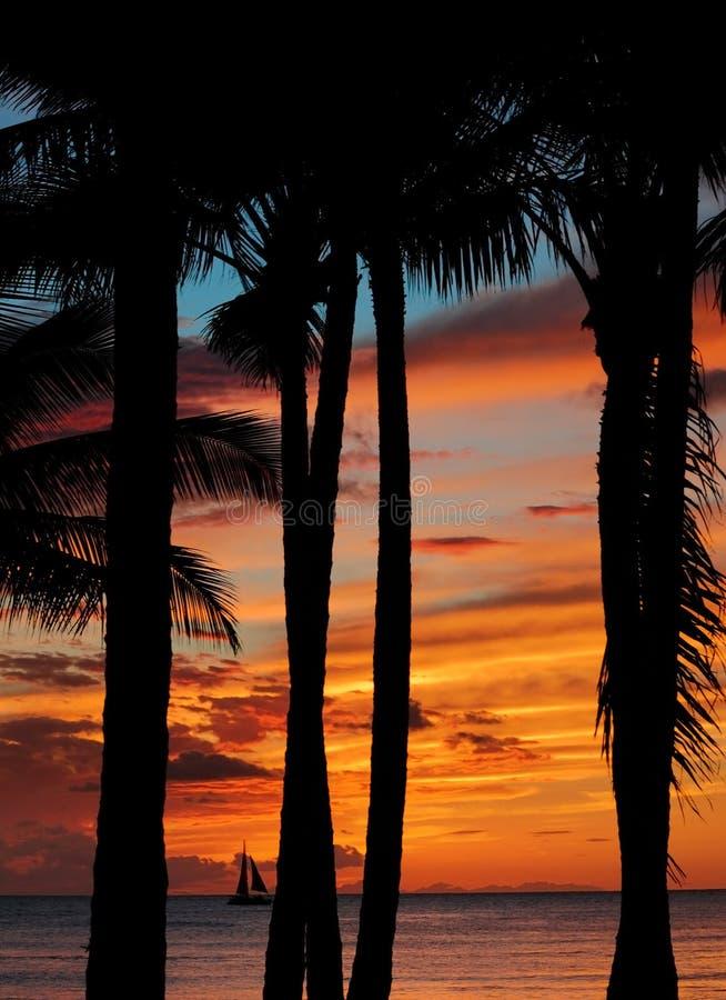 Cena tropical do por do sol fotografia de stock
