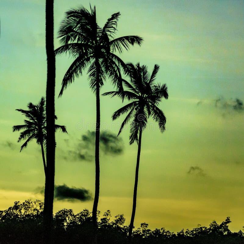 Cena tropical Portho Gallinhas Brasil do por do sol fotos de stock royalty free