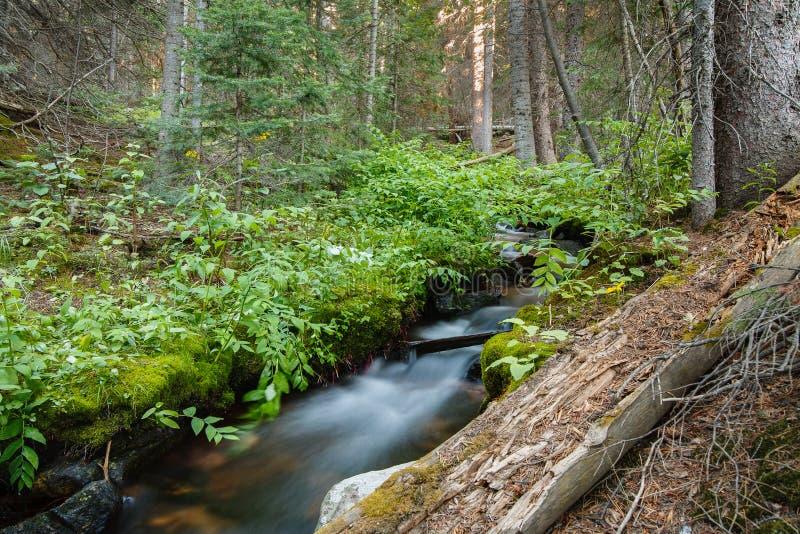 Cenas da paisagem do Colorado Rocky Mountains Angra que corre Throush uma floresta nas montanhas de Laramie imagem de stock royalty free