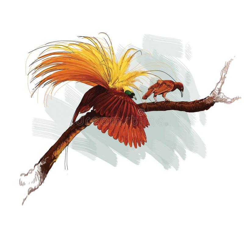 Free Cendrawasih Bird Papua Indonesia Stock Photos - 107727313