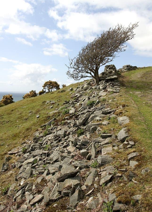 Download Cendre de montagne image stock. Image du cendre, arbres - 743725