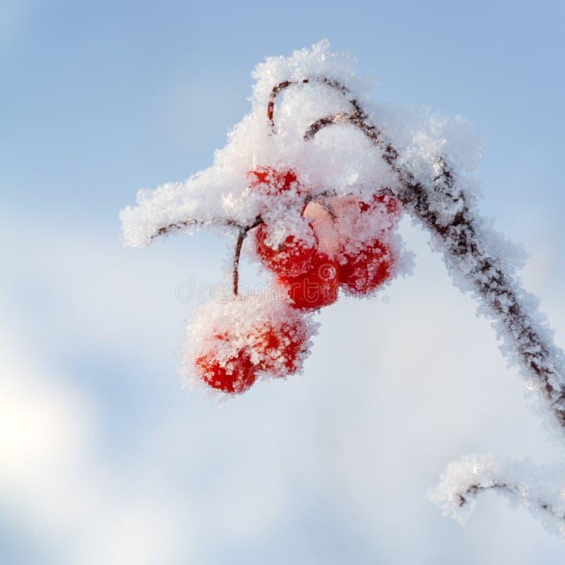 cendre de montagne couverte de neige images libres de droits