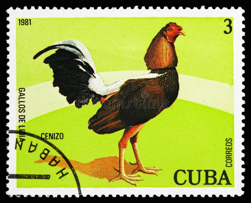 Cenizo (Gallus gallus domesticus), Fighting serie, circa 1981. MOSCOW, RUSSIA - OCTOBER 21, 2018: A stamp printed in Cuba shows Cenizo (Gallus gallus domesticus royalty free stock photo
