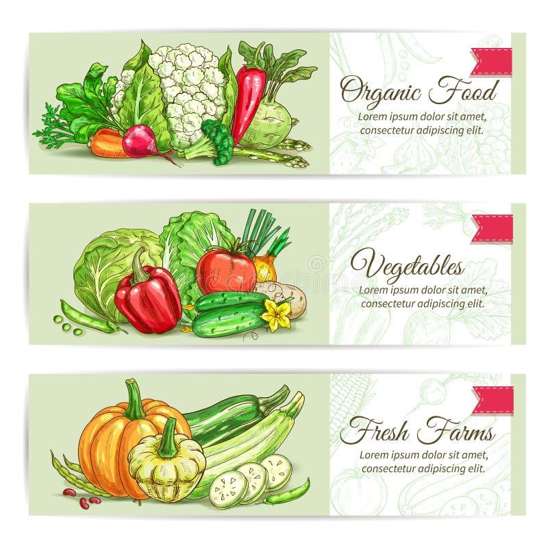Cenografia orgânica da bandeira do esboço dos vegetais ilustração stock
