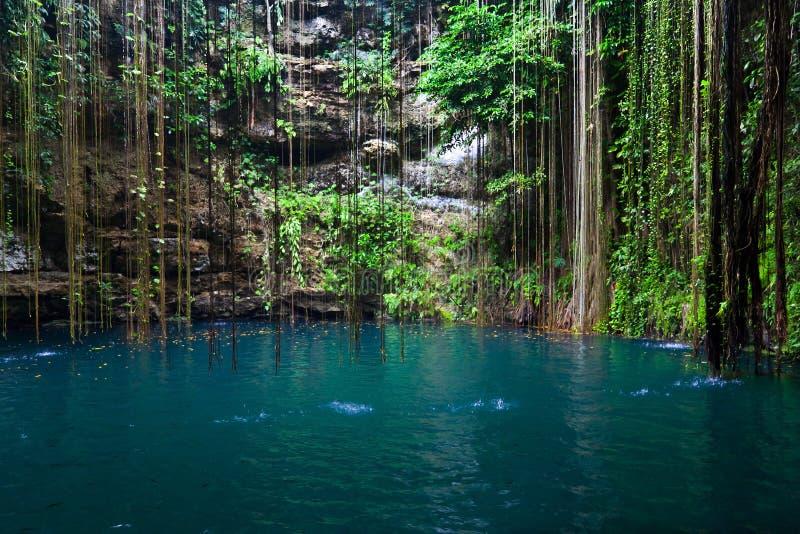 Download Cenote Ik-Kil, Mexico stock image. Image of natural, fall - 26626171