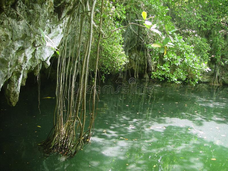cenote maya ζουγκλών mayan roo riviera quintana στοκ φωτογραφία