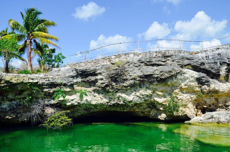 Cenote Tortuga, Coba, Yucatán, México imagenes de archivo