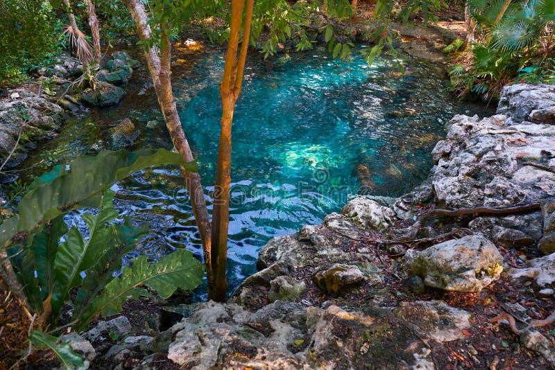 Cenotesinkhole in Riviera Maya van Mexico royalty-vrije stock foto's