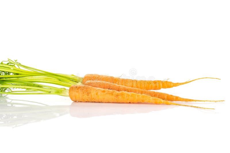 Cenoura alaranjada fresca no branco fotos de stock