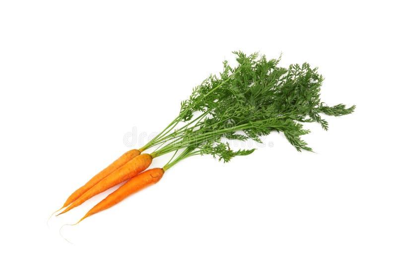 Cenoura com folhas fotos de stock