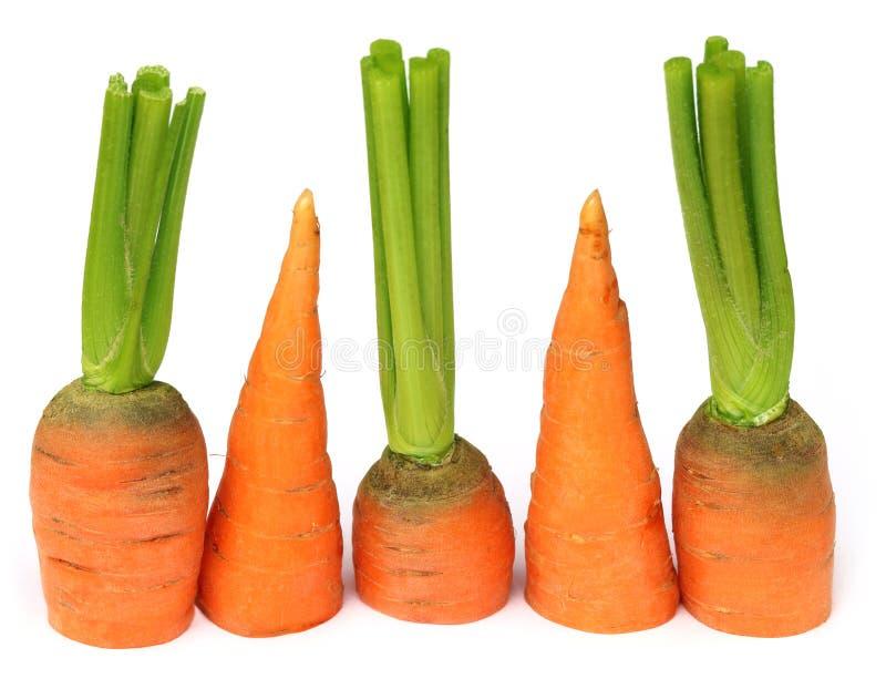 Cenoura cortada imagem de stock