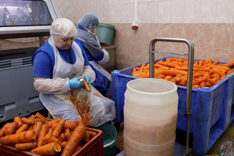 Cenoura da casca do trabalhador em uma fábrica de tratamento do alimento fotografia de stock royalty free