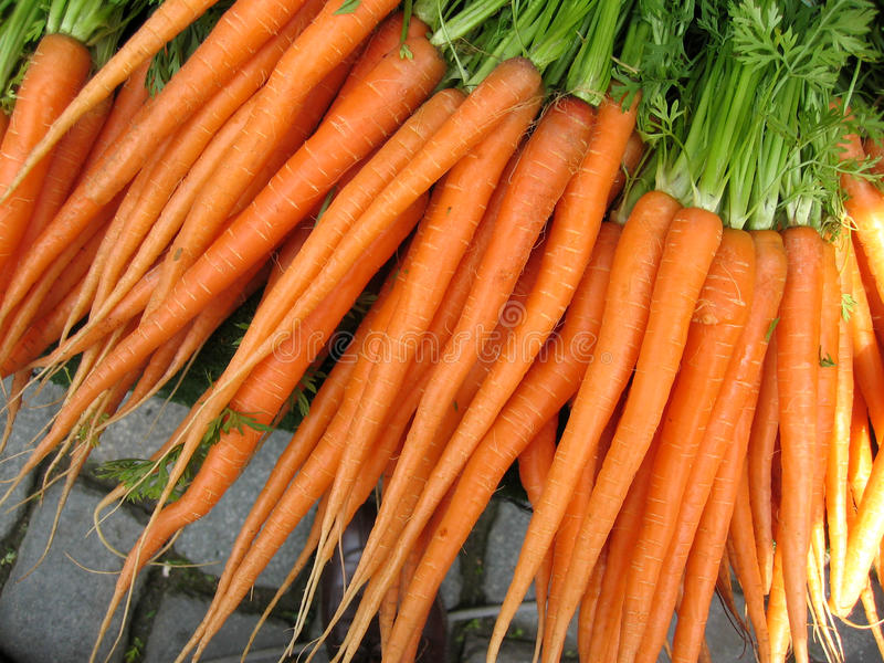 Cenoura do jardim fotografia de stock