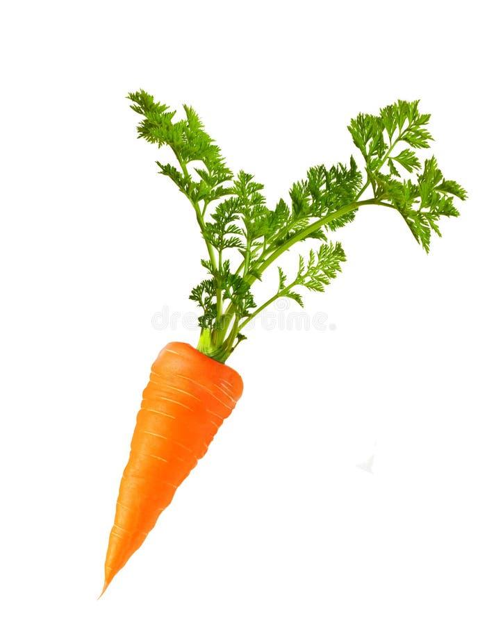 Cenoura isolada fotografia de stock