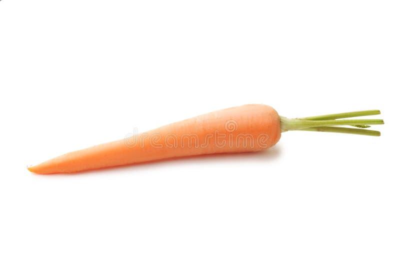 Cenoura madura foto de stock