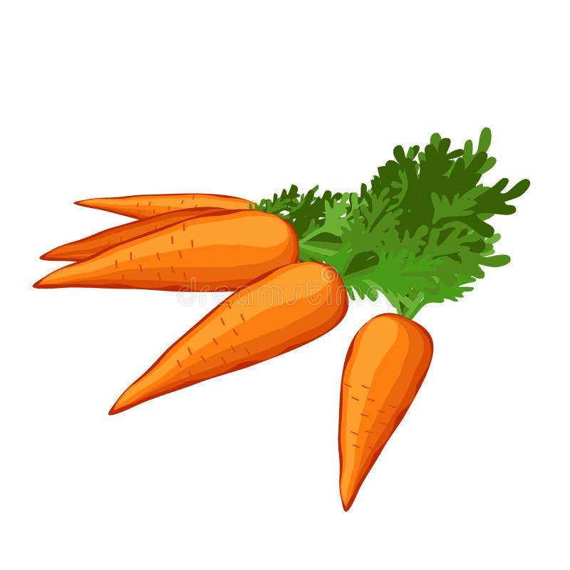 Cenoura vegetal suculenta com verdes Ilustra??o do vetor ilustração royalty free