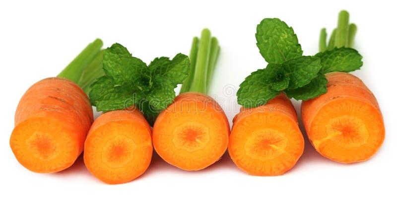 Cenouras com folhas de hortelã fotografia de stock