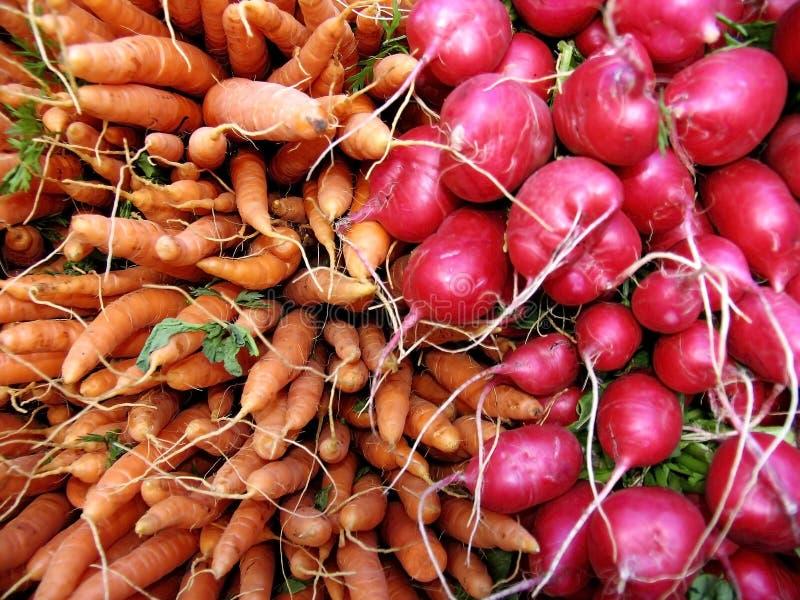 Cenouras e radishes fotografia de stock
