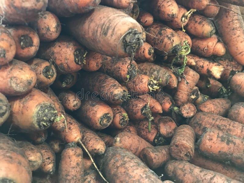 Cenouras em grandes quantidades no fundo do sumário da loja imagens de stock