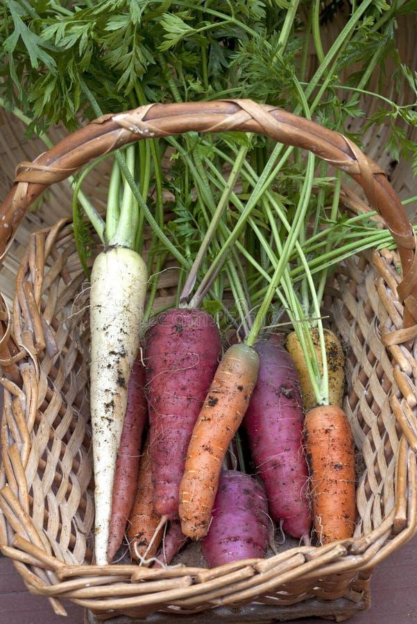 Cenouras em uma cesta. imagem de stock