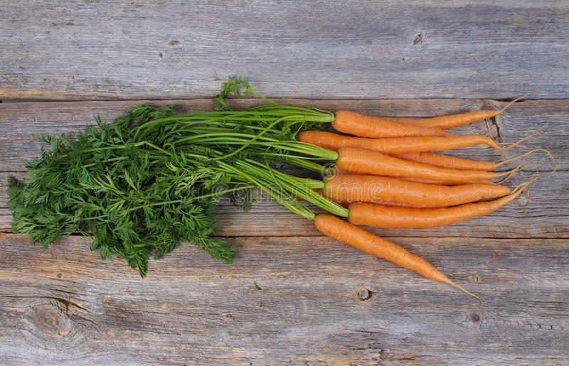Cenouras escolhidas frescas imagens de stock royalty free