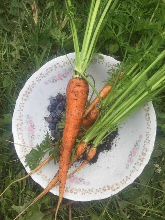 Cenouras escolhidas recentemente fotos de stock royalty free
