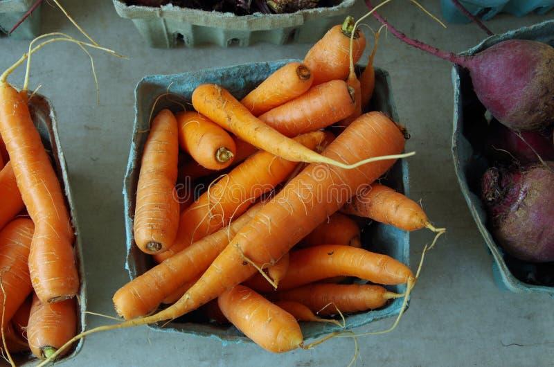 Cenouras frescas da exploração agrícola pequenos fotos de stock
