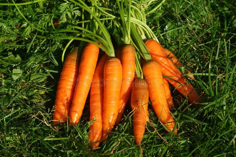 Cenouras no prado imagens de stock royalty free